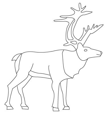 Tegning til farvelaegning af et rensdyr