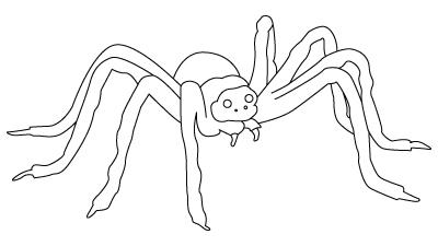 Tegning til farvelaegning af en edderkop